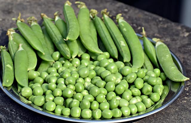 how long do peas last