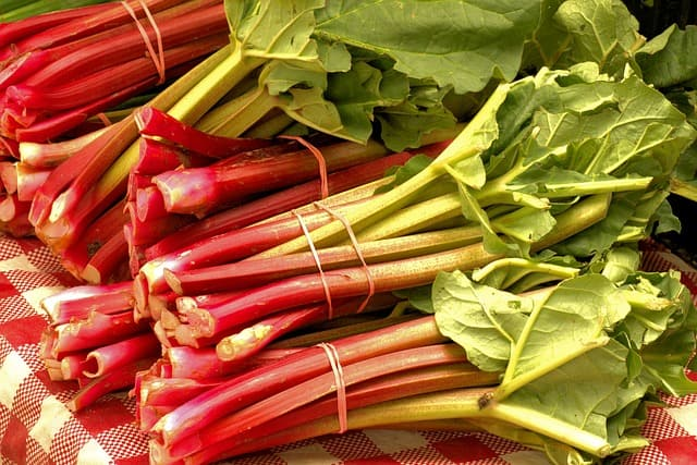 how long does rhubarb last?