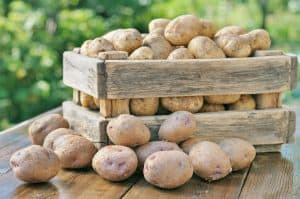 Potatoes stored in a wooden box.