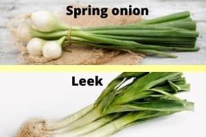 difference between spring onion and leek
